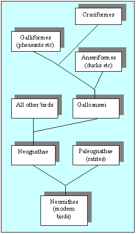 Relationships between bird families
