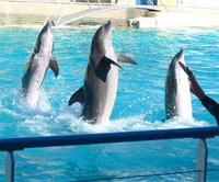 Dolphins in balance.