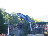 Dolphin leaping in the air.