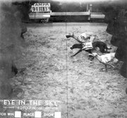 Photo finish of a Greyhound race in Tampa, Florida, USA on February 9, 1939