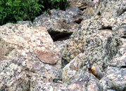 At Cedar Breaks, a marmot's (lower right) natural camouflage hides it in a pile of rocks, a common habitat.