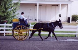 John Henry - At Walnut Hill Carriage Competition