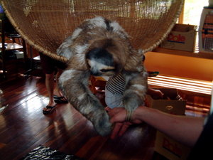 Three toed sloth in a Costa Rican rehabilitation center.