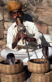A snake charmer during a performance in Jaipur, India