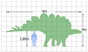 The size of a Stegosaurus compared to a human
