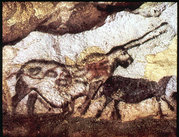 The 'unicorn' in the cave paintings of Lascaux, France